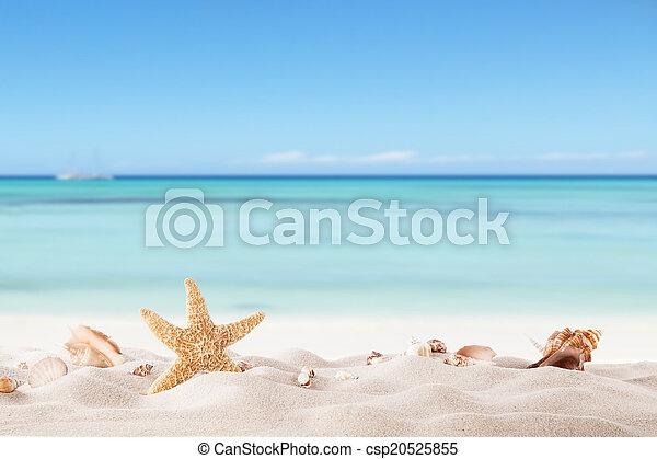 Playa de verano con estragos y conchas - csp20525855