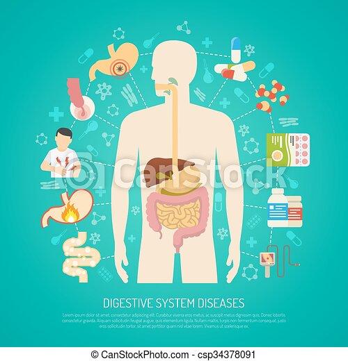 Verdauungssystem Abbildung Krankheiten Koerper Wohnung