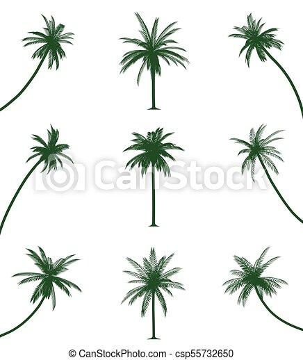 verde, árboles de palma - csp55732650