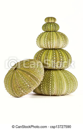 Erizos de mar verde apilados - csp13727590