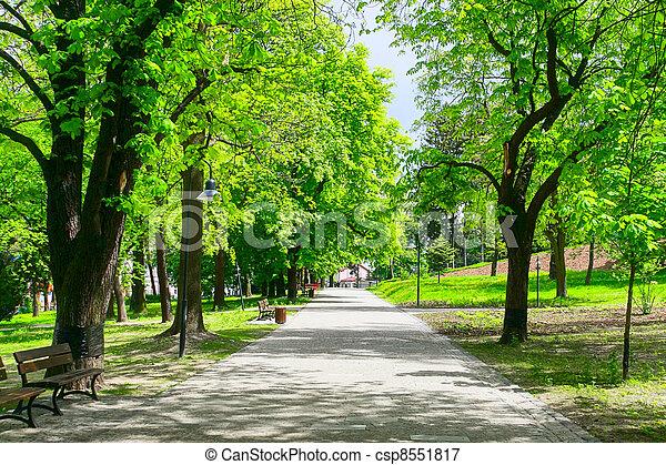 verde, callejón - csp8551817
