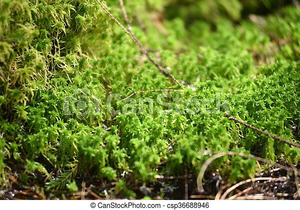 Detalles de musgo verde en el bosque - csp36688946