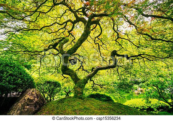 verde, espantoso, árvore - csp15356234