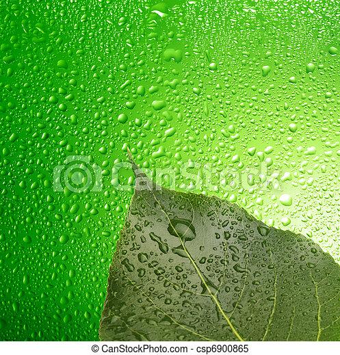 Hoja verde con gotas - csp6900865