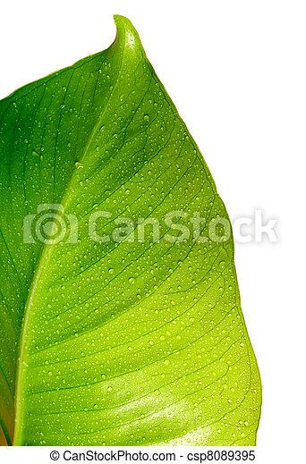 Hoja verde con gotas - csp8089395