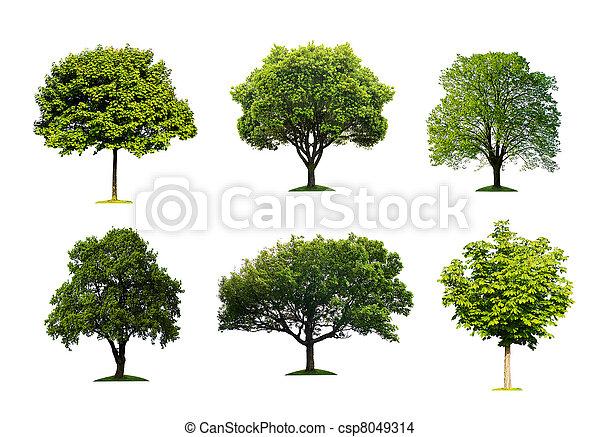 verde, isolado, árvores - csp8049314