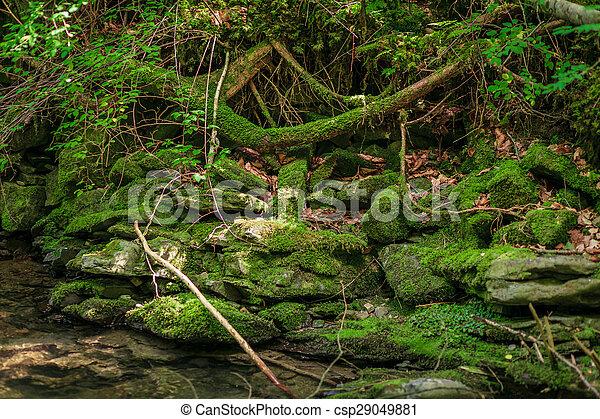 verde, musgo, fluxo, pedras - csp29049881