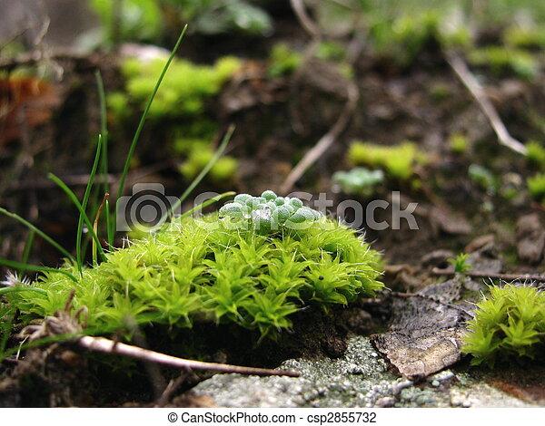 Musgo verde - csp2855732