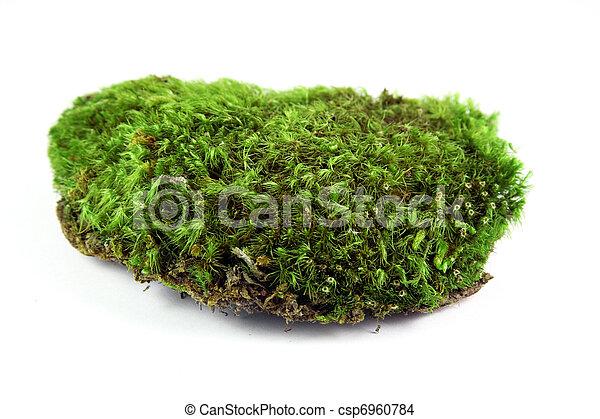 Musgo verde - csp6960784