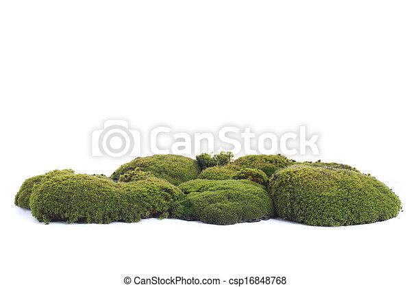 Musgo verde - csp16848768