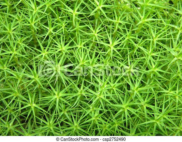 Una vista cercana a un musgo verde como fondo - csp2752490