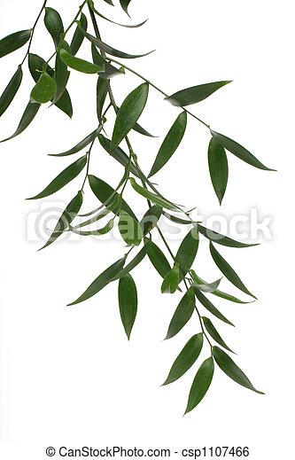 verde, ramo - csp1107466