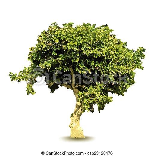 verde, vetorial, árvore - csp23120476