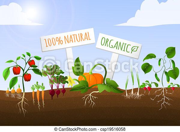 verdura, manifesto, giardino - csp19516058