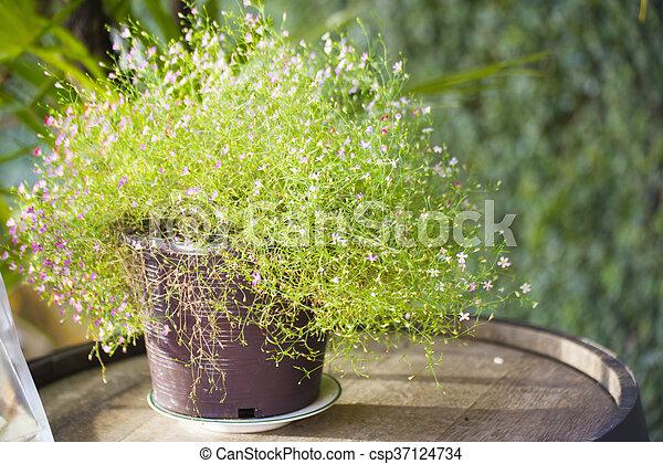 Bloemen In Pot.Versiering Kleine Pot Bloemen Boompje