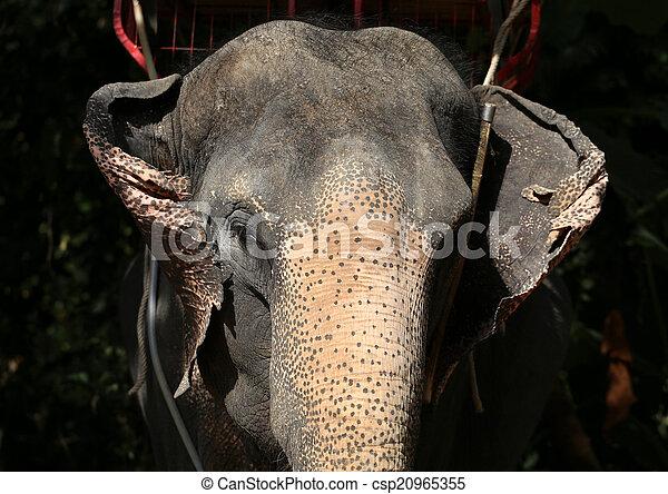 verticaal, elefant - csp20965355