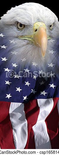 Vertical eagle banner - csp16581421
