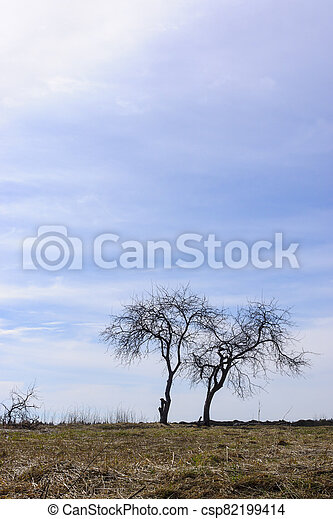 Vertical nature landscape with couple of trees on meadow - csp82199414
