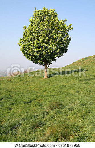 Vertical view of a small tree in an English field. - csp1873950