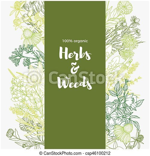 Verticale Colorare Erbe Sfondo Verde Medicinale Fiori Bianchi