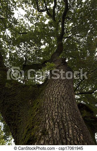 very tall trees - csp17061945