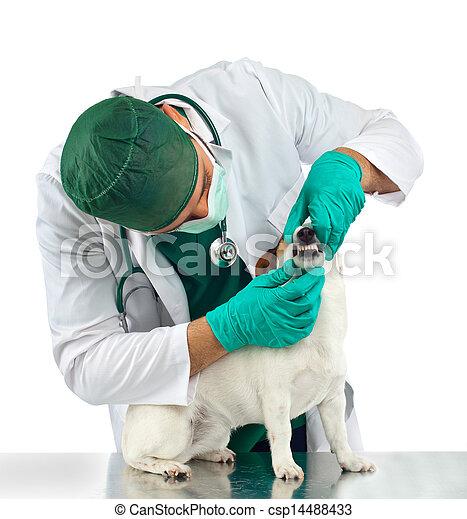 Veterinarian examines the dog's teeth - csp14488433