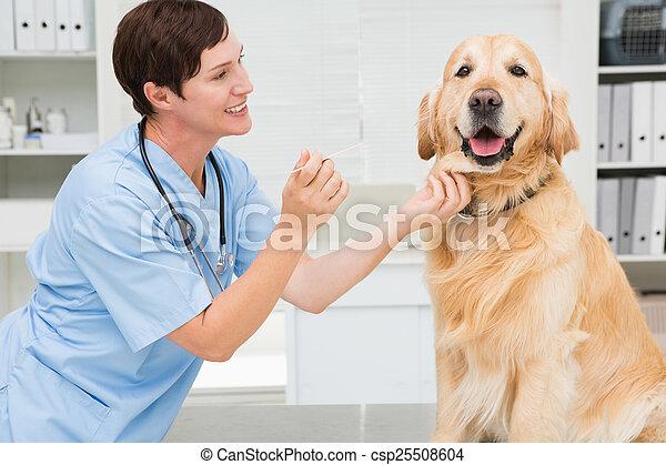 Veterinarian examining mouth of a cute dog - csp25508604