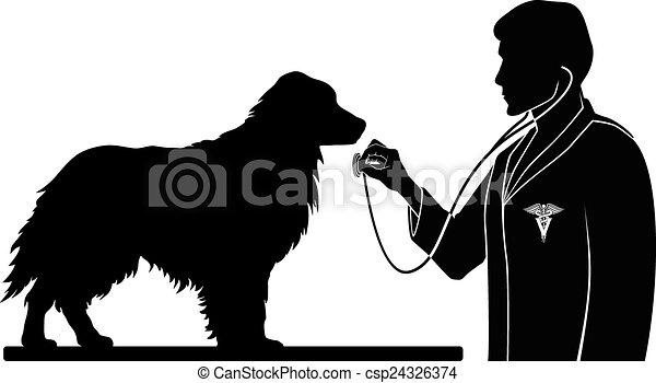Veterinario con perro - csp24326374