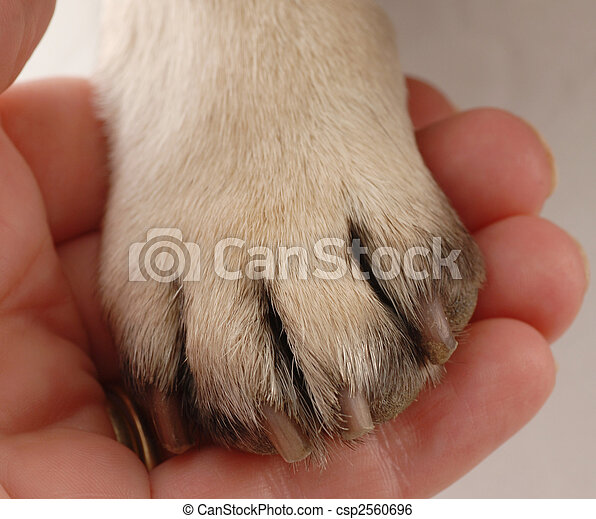 veterinary care - persons hand holding dog paw - csp2560696