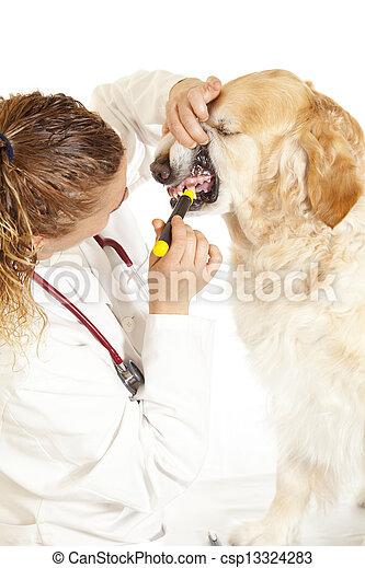 Veterinary consultation - csp13324283