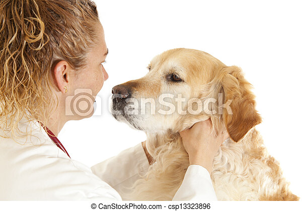 Veterinary consultation - csp13323896