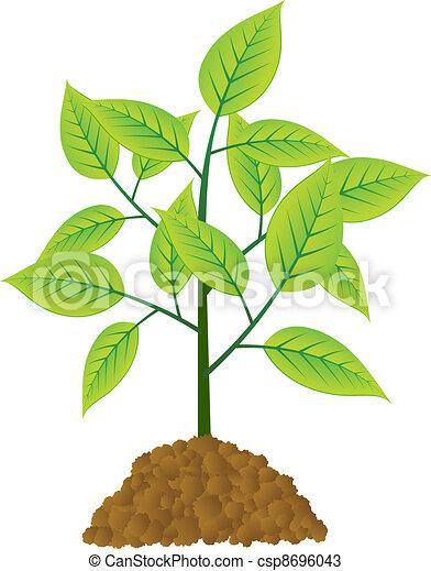 vetorial, árvore, jovem - csp8696043