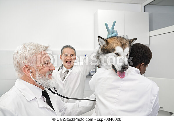 Vets having fun, doctor doing v sign to dog. - csp70846028