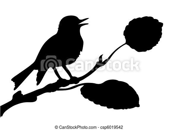 vettore, silhouette, uccello, ramo - csp6019542