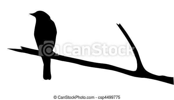 vettore, silhouette, uccello, ramo - csp4499775