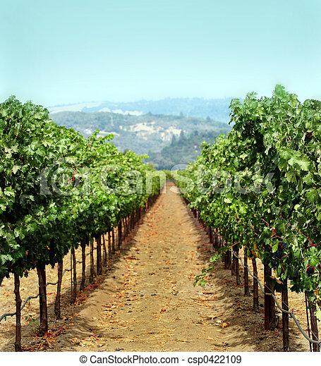 Vineyard - csp0422109