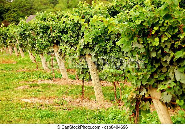 Vineyard - csp0404696