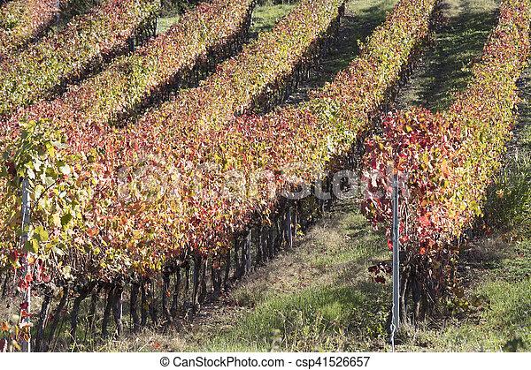 Vineyard en otoño - csp41526657