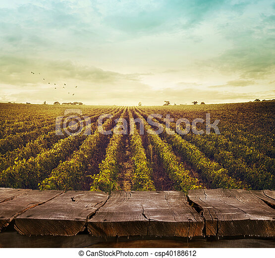 Vineyard en otoño - csp40188612