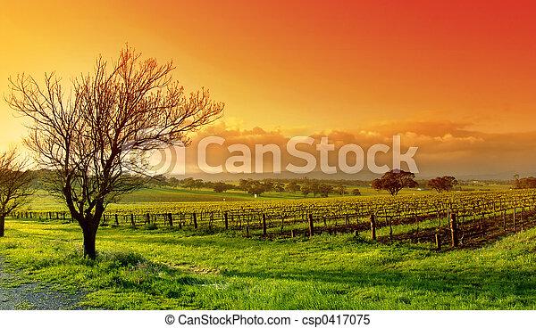 Un paisaje de viñedos - csp0417075