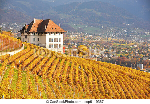 Viñedos en la región de lavaux, Suiza - csp6119367