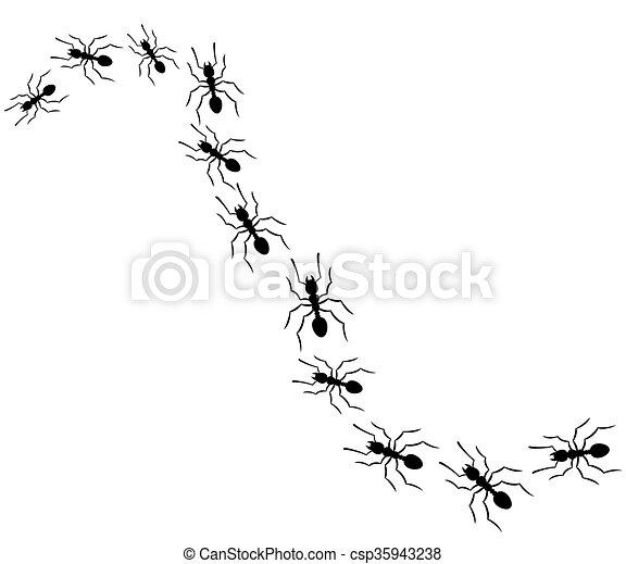 Hormigas viajando en fila - csp35943238
