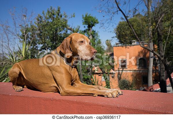 Perro que viaja acostada obedientemente en México - csp36936117