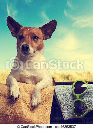 Un concepto de viaje con un Jack Russell Terrier - csp46353537