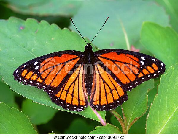 Viceroy Butterfly (Limenitis archippus) Illinois - csp13692722