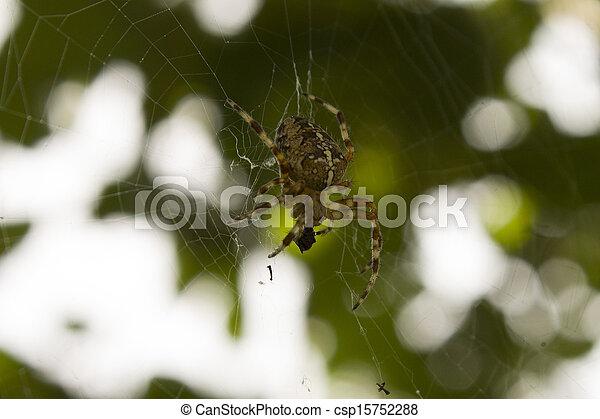 victim., mange, sien, araignés - csp15752288