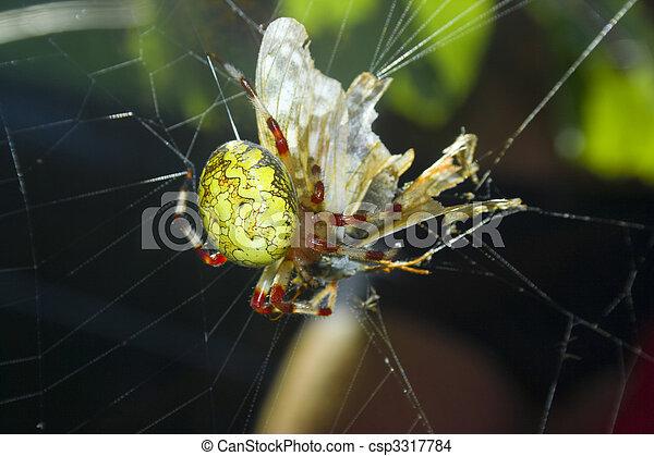victim., manger, araignés - csp3317784