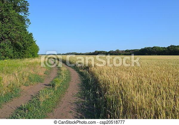 vidéki parkosít - csp20518777