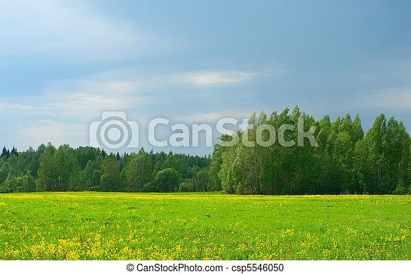 vidéki parkosít - csp5546050