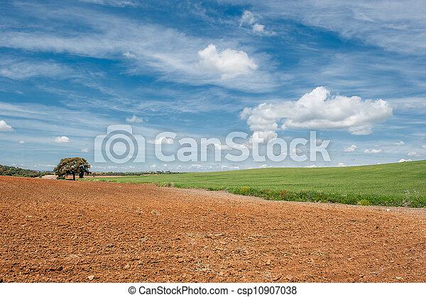 vidéki parkosít - csp10907038